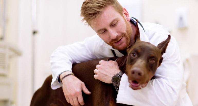Consejos profesionales para el cuidado de nuestras mascotas