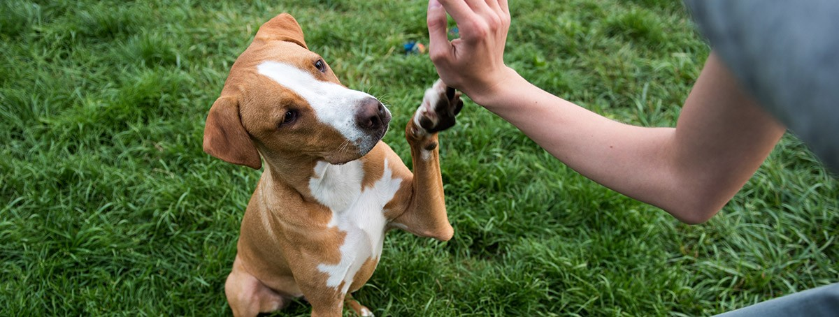Cómo adiestrar a tu perro: Nivel 1