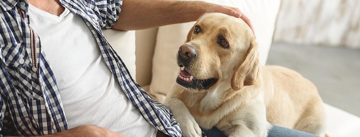 Los perros mejoran el mundo