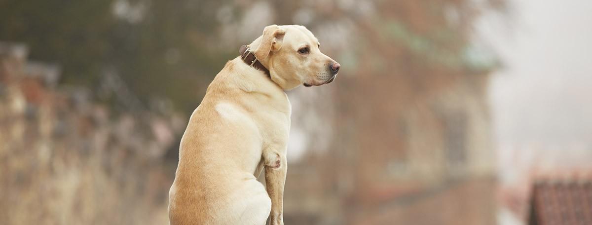 La vuelta al cole: ¿los perros se sienten solos?