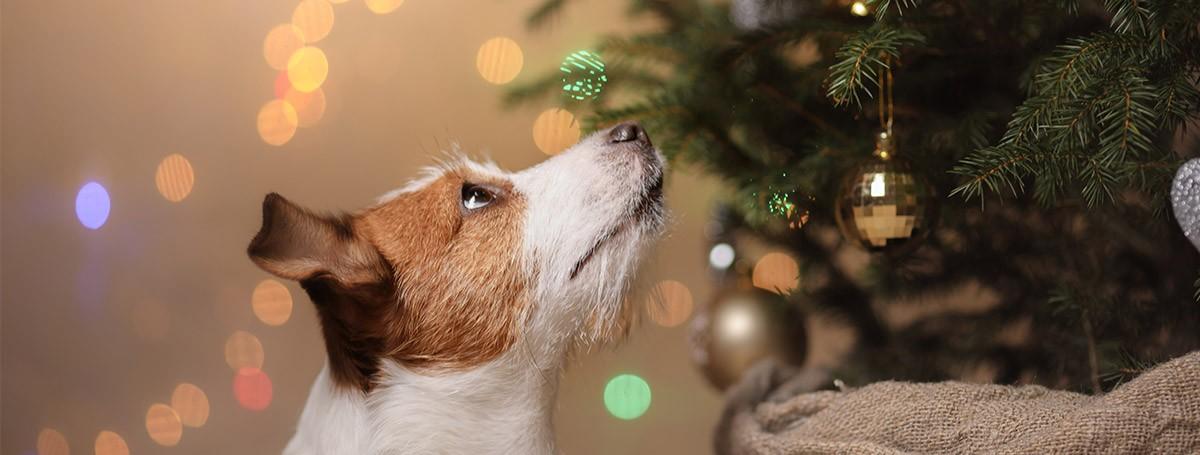 Conseguir unas Navidades seguras para nuestro perro