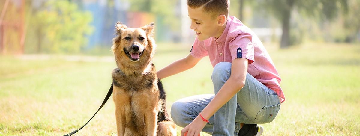 Apunta estos consejos para pasear a tu perro