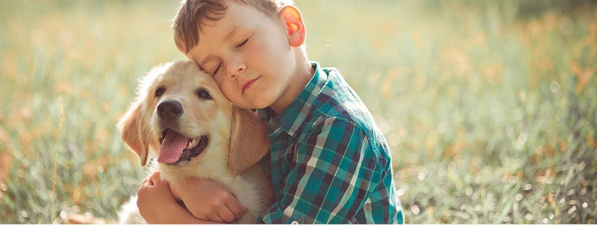 Prepara la llegada de un perro adoptado al hogar