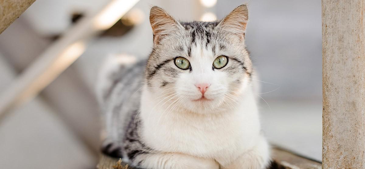 El gusano redondo en gatos: los gatitos, los más expuestos