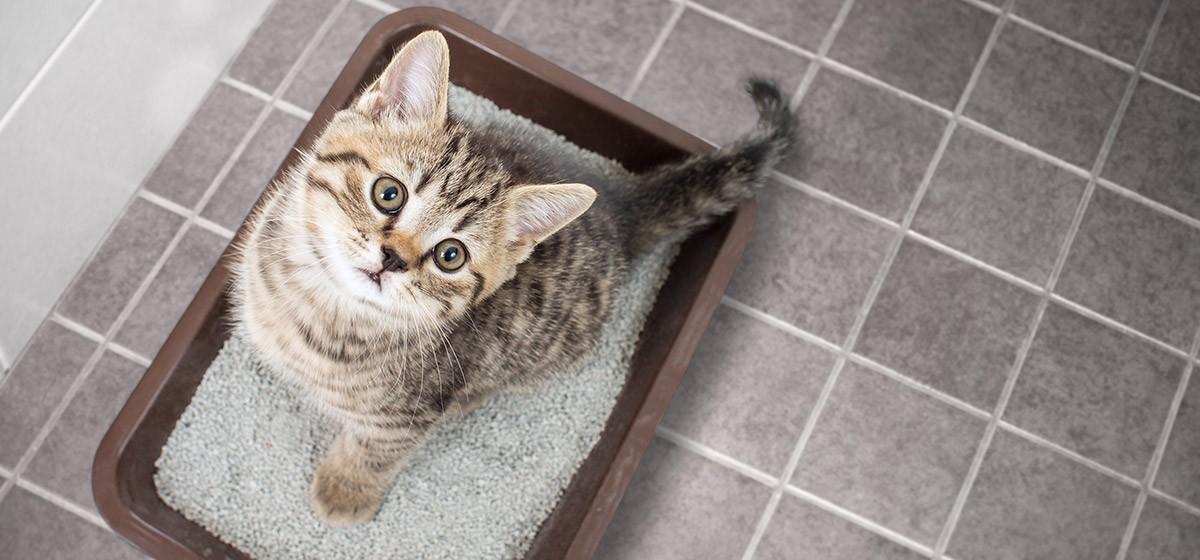 Adiestramiento para gatos