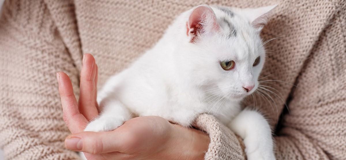 El gusano pulmonar en gatos: El cazador cazado