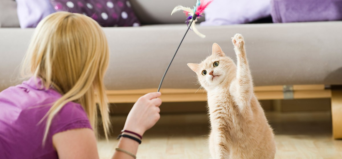 ¿Porqué los gatos arañan y muerden cosas?