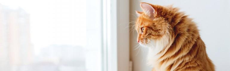 imagen principal post blog de mascotas