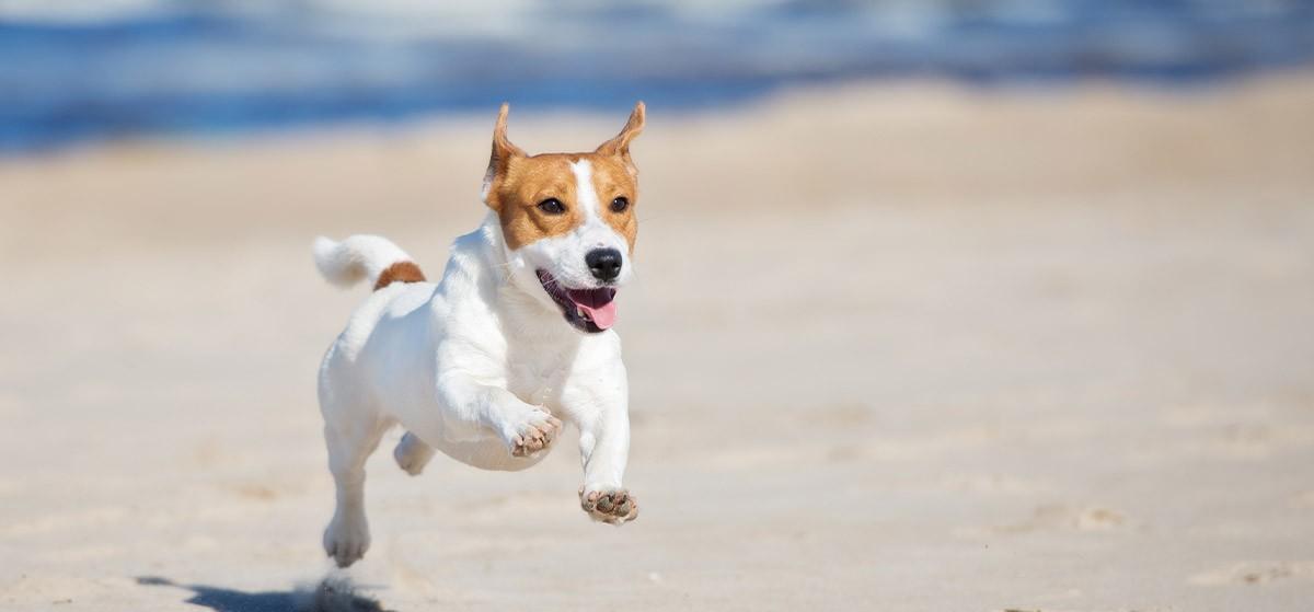 Viajar con perros: Es lo que más me gusta