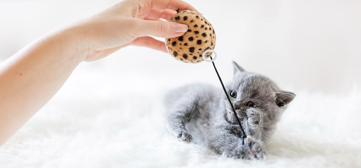 Juguetes para gatos: nuevas versiones, actualizaciones y diseños