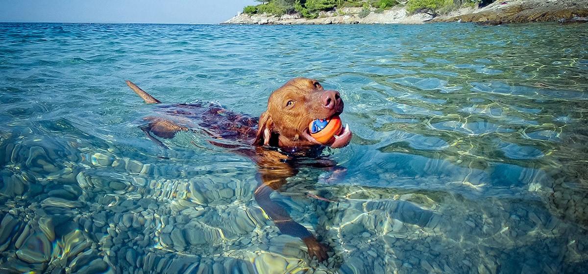 ¿Los perros saben nadar?