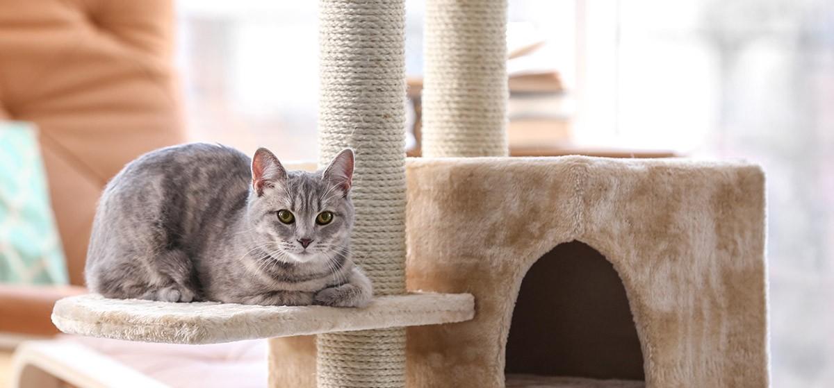 El gusano del corazón en gatos: Un riesgo insospechado