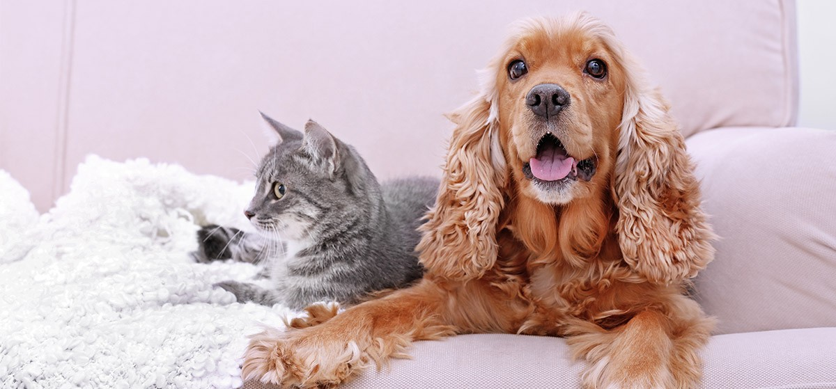 10 claves para la mejor convivencia entre el perro y el gato