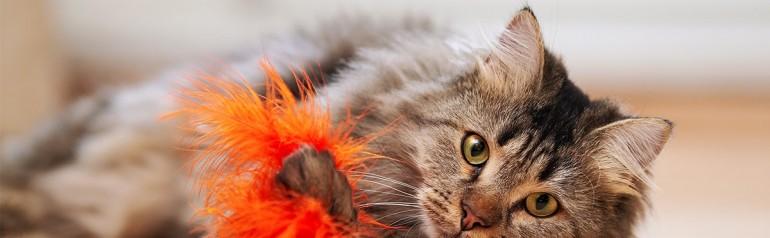 El Gato Tiene Tenias Puedo Conseguirlas Las Heces De Mi Gato